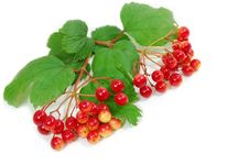 Free Red Berries Royalty Free Stock Photo - 5952305
