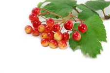 Free Red Berries Royalty Free Stock Images - 5952309
