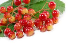 Free Red Berries Royalty Free Stock Photo - 5952315