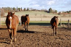 Free Three Horses Stock Photography - 5952752
