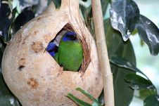 Exotic Bird Stock Images