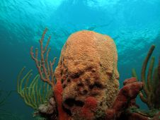Free Coral Reef Royalty Free Stock Photography - 5954067