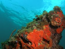 Free Coral Reef Stock Image - 5954181