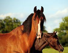 Free Horses Stock Photo - 5955320