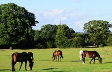 Free Horses Stock Images - 5955324