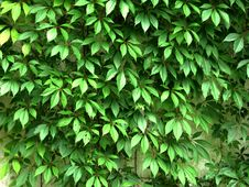 Free Green Wall Stock Image - 5955591