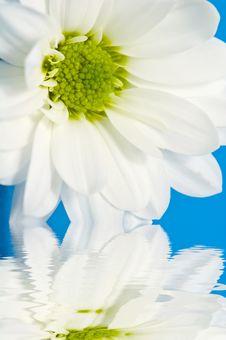 Free White Daisy Royalty Free Stock Photography - 5956317