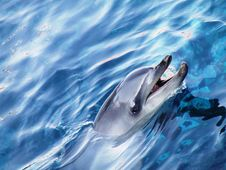 Free Dolphin Head Stock Photo - 5956600