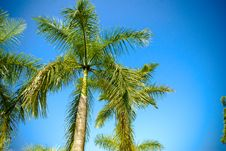 Free Coconut Tree Stock Images - 5957104