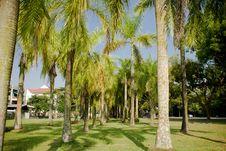 Free Coconut Tree Royalty Free Stock Photos - 5957108