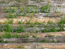 Free Logs On The Field Royalty Free Stock Image - 5957966