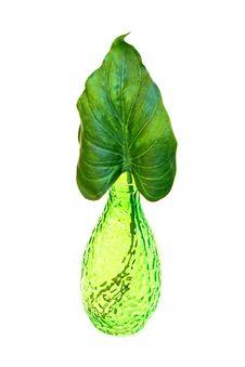 Free Leaf Vase Stock Photography - 5958792