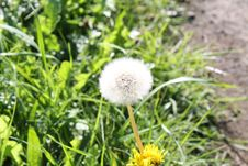 Free Blowball Dandelion With Grass In Background Stock Photo - 59594660