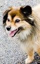Free Dog Royalty Free Stock Photography - 5960797