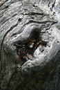 Free Open Lips On A Tree Trunk Royalty Free Stock Photos - 5963608