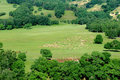 Free Pasture Royalty Free Stock Photography - 5965577