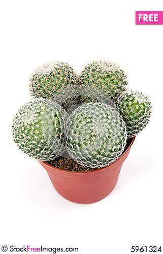 Free Green Cactus Stock Images - 5961324