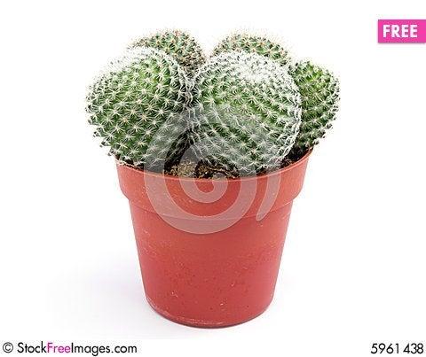 Free Green Cactus Royalty Free Stock Photos - 5961438