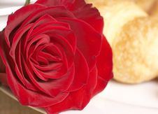 Free Macro Shot Of Red Rose With Breakfast Stock Images - 5960284