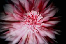 Free Zoomed Dahlia Royalty Free Stock Photography - 5960687