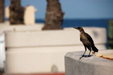 Free Bird At The Pier Stock Images - 5960934