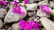 Free Flower Power Royalty Free Stock Photos - 5961068