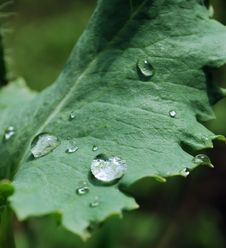 Free Drops Of Water On A Leaves Royalty Free Stock Image - 5961126
