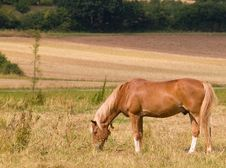Free Brown Horse Grazing Stock Photo - 5962270