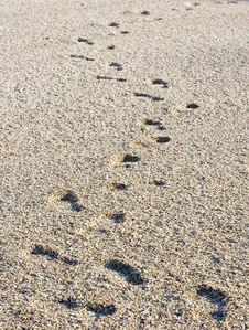 Footprints On Seashell Beach Royalty Free Stock Images