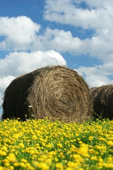 Free Round Hay Bale In Field Royalty Free Stock Image - 5963646