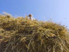 Free Haymaking In Siberia 12 Royalty Free Stock Images - 5964779