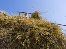 Free Haymaking In Siberia 11 Stock Image - 5964821