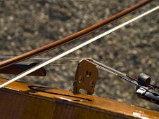 Free Viola Royalty Free Stock Photo - 5965065