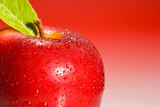 Shinny Red Apple Close Up Stock Image