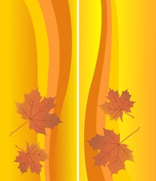 Autumn Background With Maple Leafs Stock Photos
