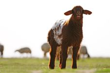 Free New Born Royalty Free Stock Photos - 5965898