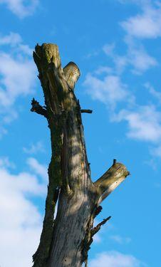 Free Dead Tree On Sky Royalty Free Stock Image - 5966136