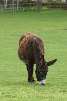 Free Donkey Royalty Free Stock Photography - 5966867
