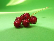 Free Red Currant Royalty Free Stock Photo - 5966985
