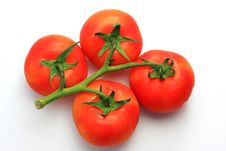 Free Four Tomatoes Stock Photos - 5967873