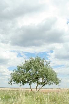 Free Lonely Tree Stock Photo - 5968890