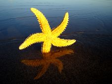 Free Starfish Royalty Free Stock Photos - 5969578