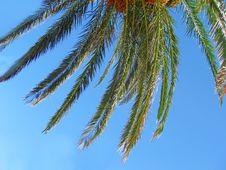 Free Twig Of Palm Stock Photos - 5969683
