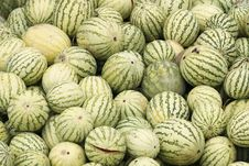 Free Rotting Melons Royalty Free Stock Images - 5969869