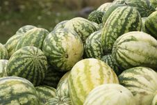 Free Melons Royalty Free Stock Photography - 5969887