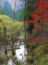 Free Autumn Forest Royalty Free Stock Images - 5970569
