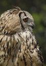 Free Beatiful Owl Royalty Free Stock Photography - 5972487