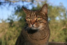 Free Farm Cat Stock Photo - 5970330