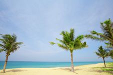 Free Tropic Beach Stock Photography - 5971412