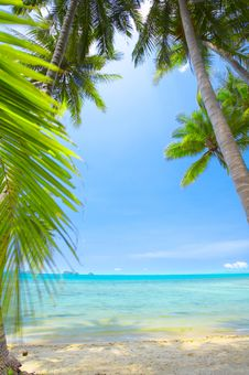 Palms And Ocean Royalty Free Stock Image